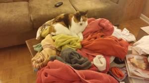 Cocolaundry