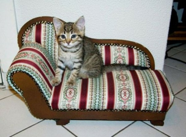 house-cat-pampered-cat-furniture-bed-chic-sofa
