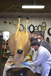 youngs-jersey-cow-in-surgery