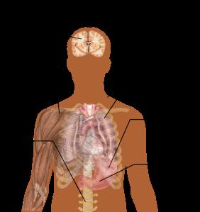 800px-Symptoms_of_Malaria